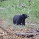 Bear Photo Gallery